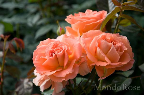 Flora Danica ®